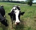 First phase done to conserve Bodwell Farm