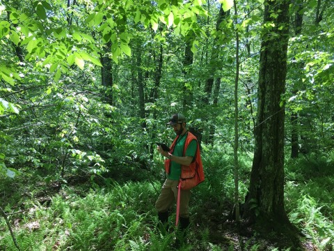 Seasonal Stewards monitored nearly 70 conserved properties this Summer!