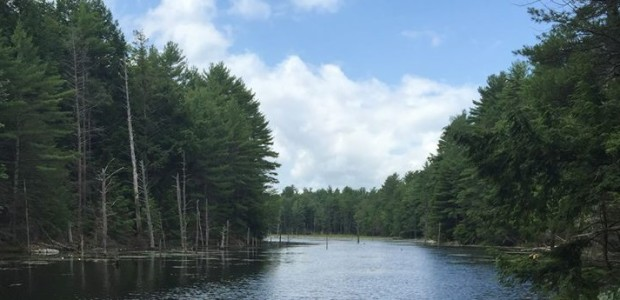 Explore the Brown Brook Forest