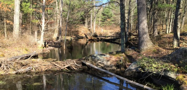 Grow the Musquash Trail Celebration