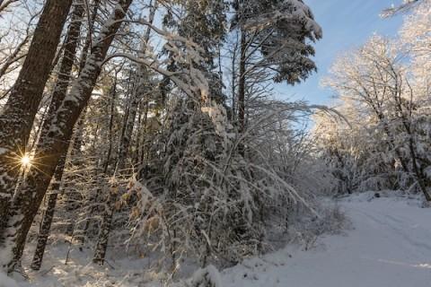 Winter's Whispers